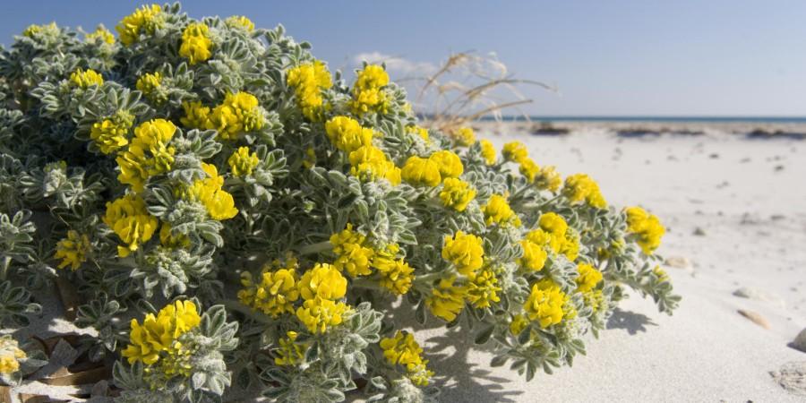 Vegetazione in spiaggia