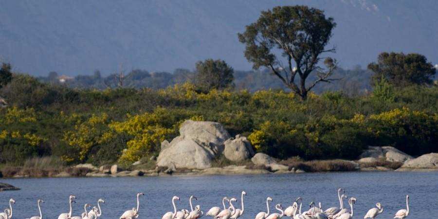 Macchia mediterranea e laguna