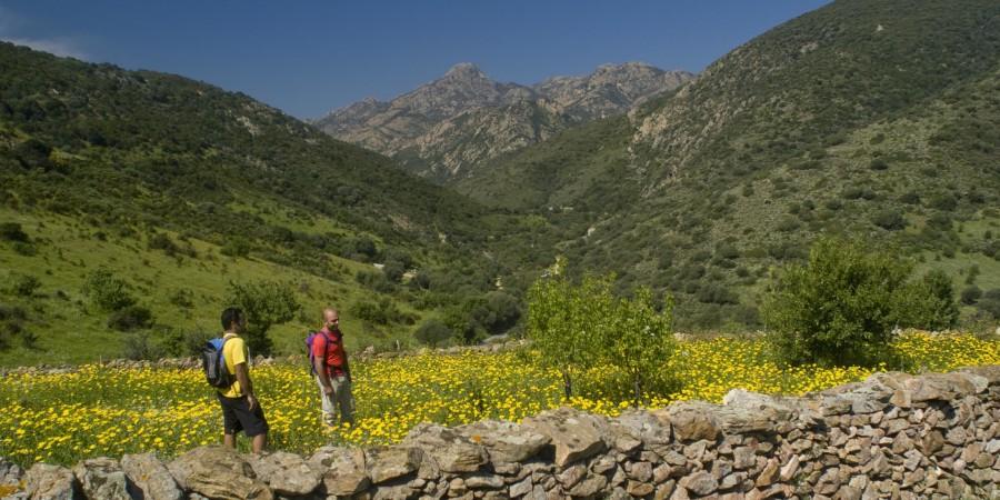 Escursione a piedi al Monte Nieddu