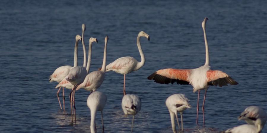 Fenicotteri in Laguna